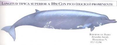 Significado de so ar con peces o pescando - Canciones de cuna torrent ...